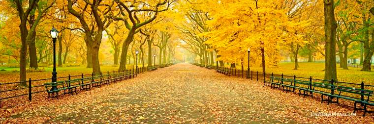 central-park-panoramic-new-york-city-autumn-fall-foliage-literary-walk-tree-lined-mall-high-definition-hd-professional-photography
